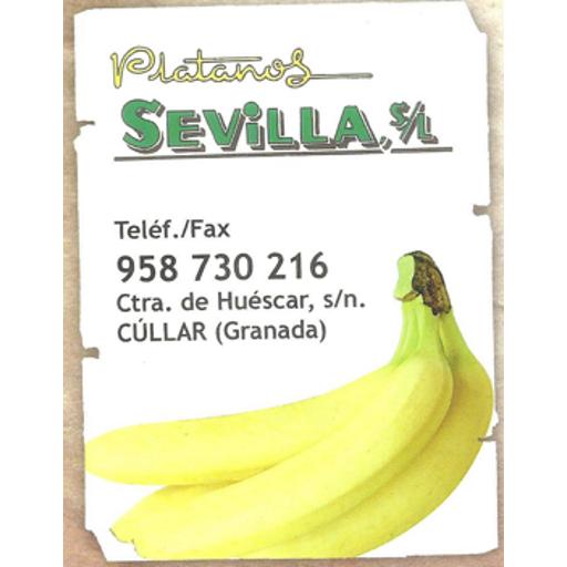Plátanos Sevilla